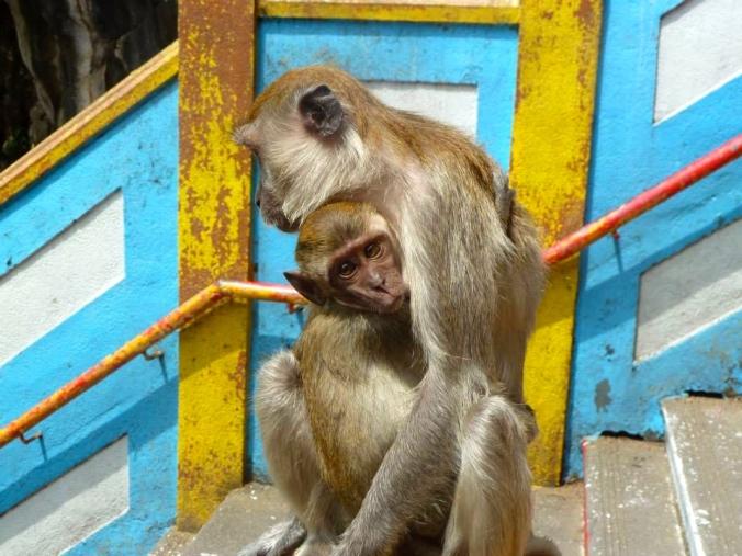 Monkeys on the steps at Batu Caves, KL