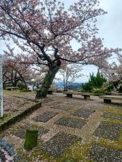 Sakura, Senkoji Park, Onomichi.