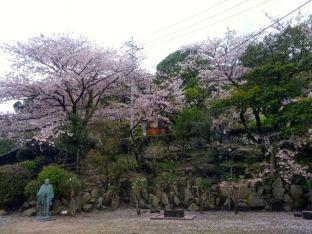 Sakura falling like snow, Onomichi.