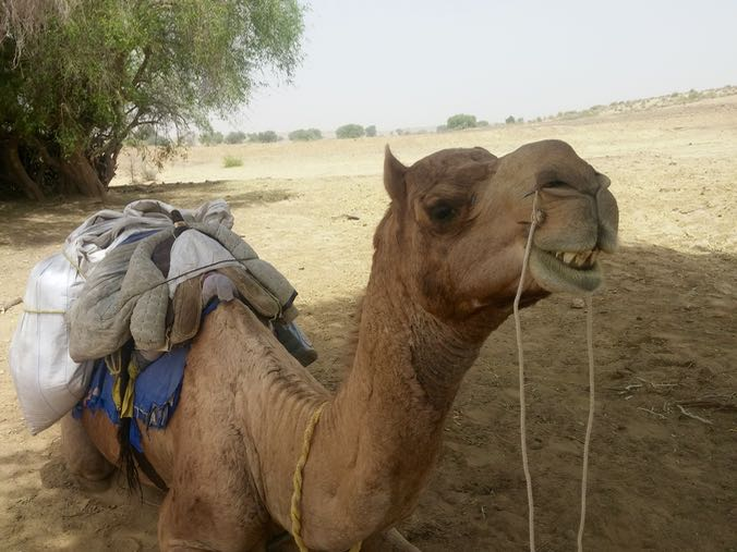 I named my camel Simon.